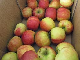 selniška jabolka, ki so najboljša za pravi, dober jabolčni štrudl