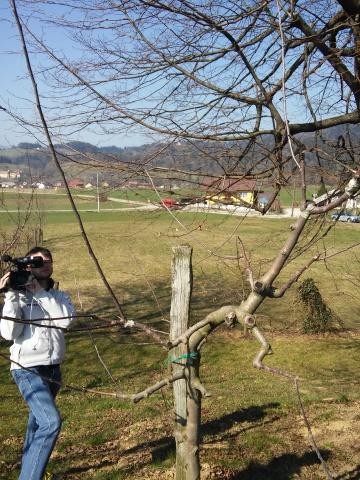 20150321_cepljenje dreves (35)