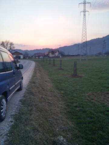 cesnjev drevored saditev2015 (1)