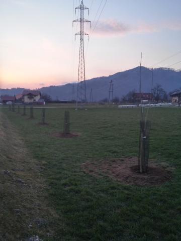 cesnjev drevored saditev2015 (6)