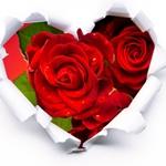 srce vrtnice