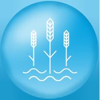 water-food
