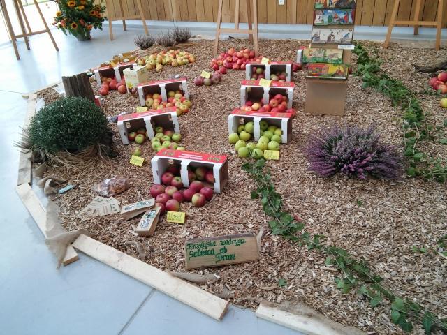 praznik jabolk in odprta dvorisca 2015 281