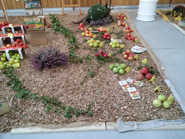 praznik jabolk in odprta dvorisca 2015 282