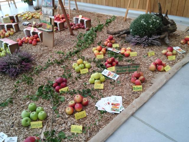 praznik jabolk in odprta dvorisca 2015 284