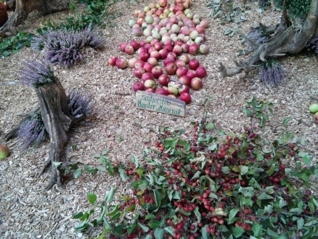 praznik jabolk in odprta dvorisca 2015 285