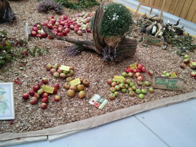 praznik jabolk in odprta dvorisca 2015 286