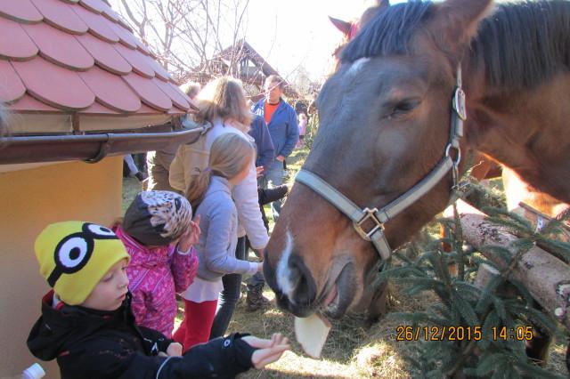 kronanje konj2