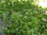 Viltus skoda zmrzal april 2016 (11)